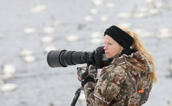 Photographing trumpeter swans