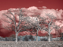false color infrared achieved with full spectrum camera and an 665 nm amplified color IR filter.