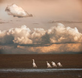 multiple exposure in camera of one egret