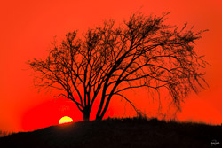 kristen-westlake--tree-with-sunset-ball-orange-0010-2.jpg